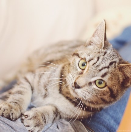 Beautiful cat photo on The Magic Onions Waldorf inspired blog