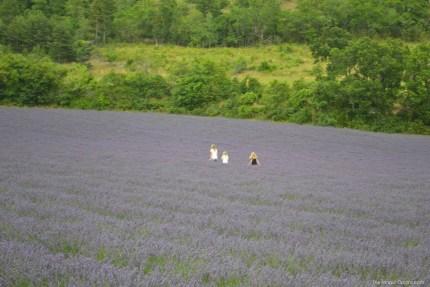 rsz_lavender_fields