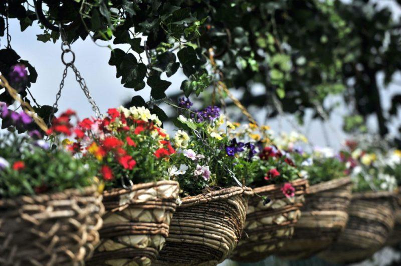 Flower planters at Disney