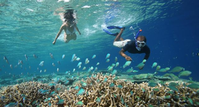 Image result for the maldives snorkeling