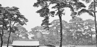 JAPAN. Tokyo. Courtyard of the Meiji shrine. 1951.