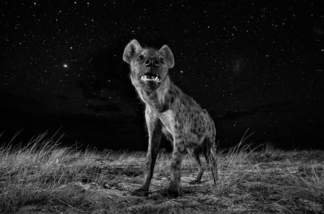 © Will Burrard-Lucas, United Kingdom, Shortlist, Professional, Natural World, 2017 Sony World Photography Awards