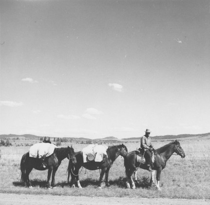 : Sheep herder on trail, Madras, Ore., July 1936