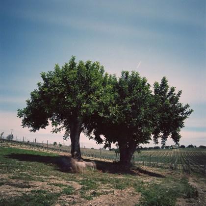 """© Germano Serafini, """"Sicilia"""", 4100K Collection"""