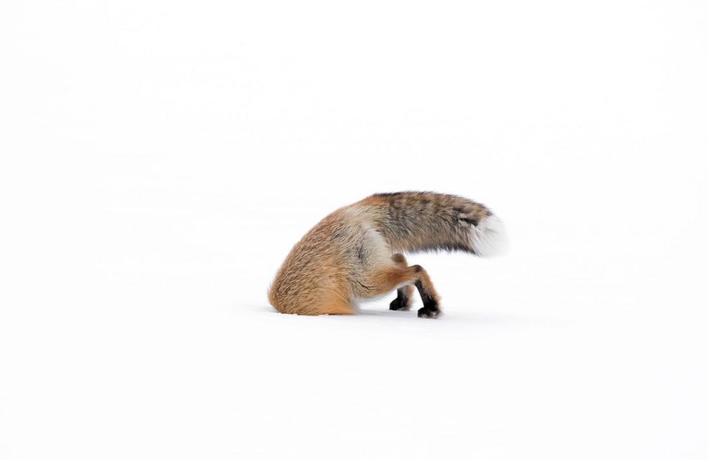 Wildlife photographer of the year in mostra alla fortezza Firmafede di Sarzana