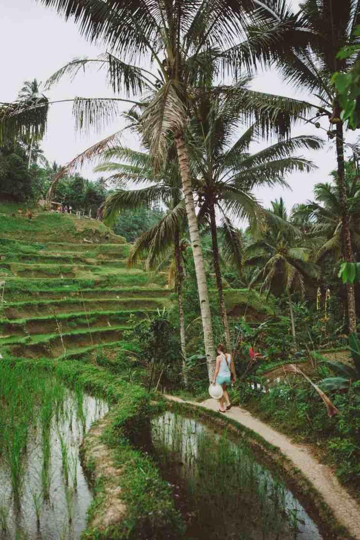 tegalalang rice terraces ubud bali 20