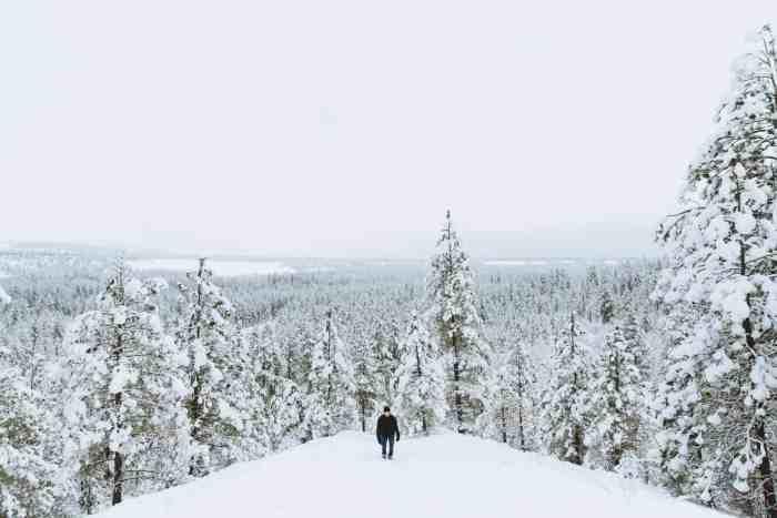 Photo Journal: Christmas Hike