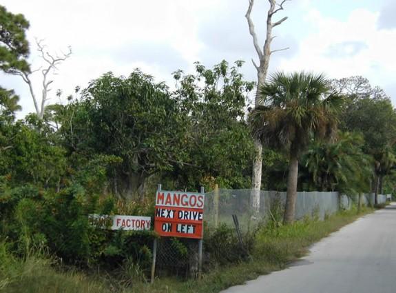 The Mango Factory