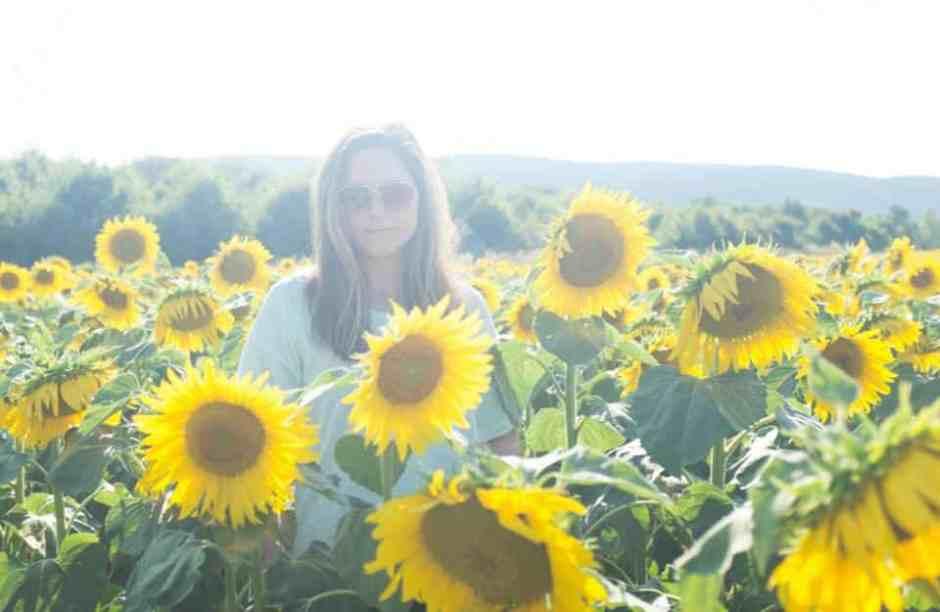 Katie_Devine-sunflower2014-2