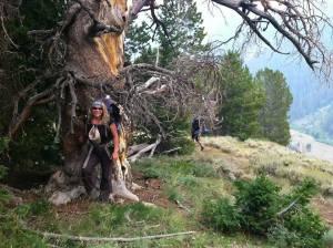 Denise_Boehler-tree_hugging_in_the_absarokas