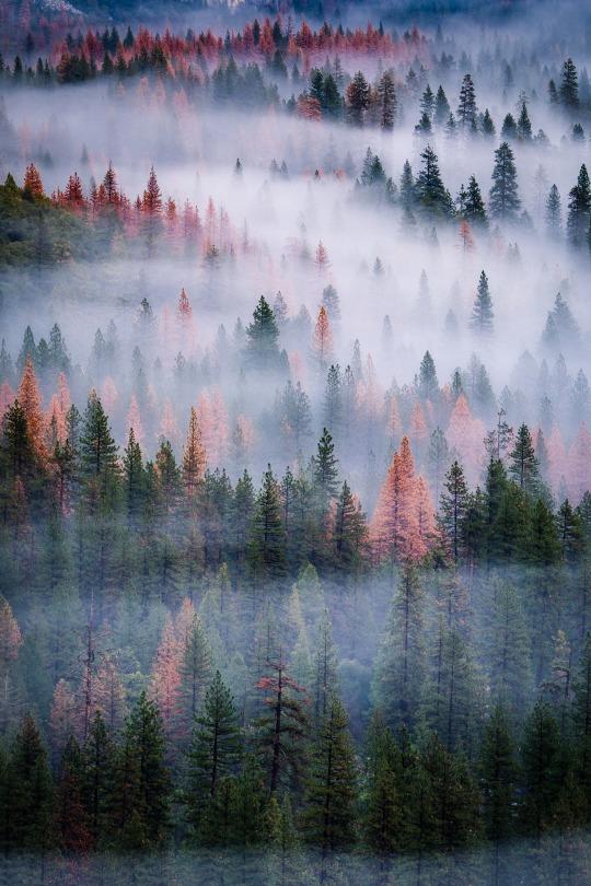 fall fog and trees
