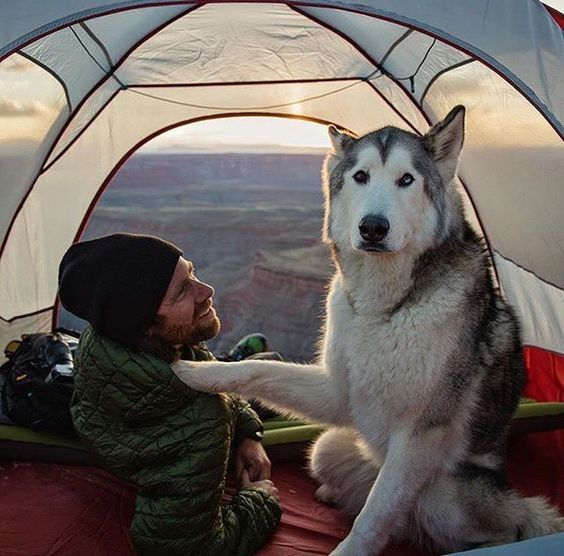 man with husky in tent