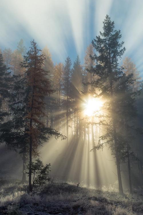 sunrise through trees in winter
