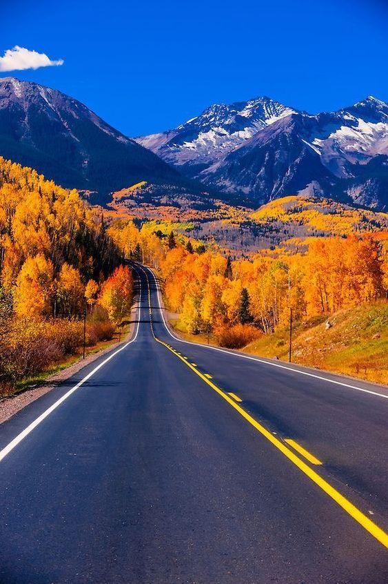 long road through fall trees
