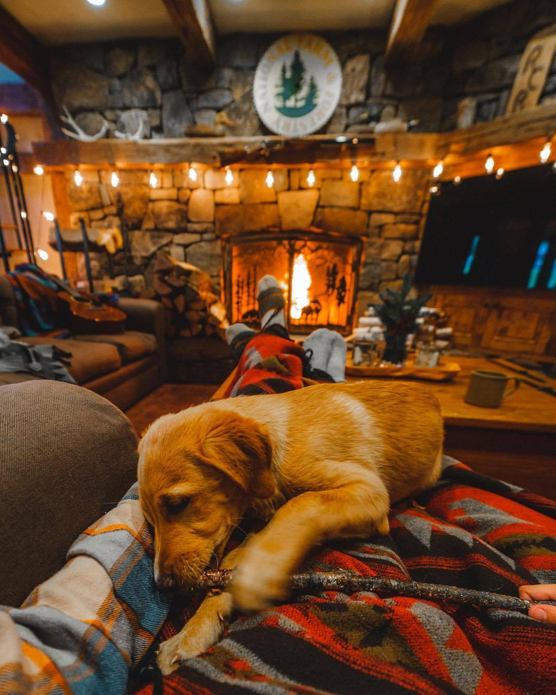 puppy playing with stick inside of cabin with fireplace