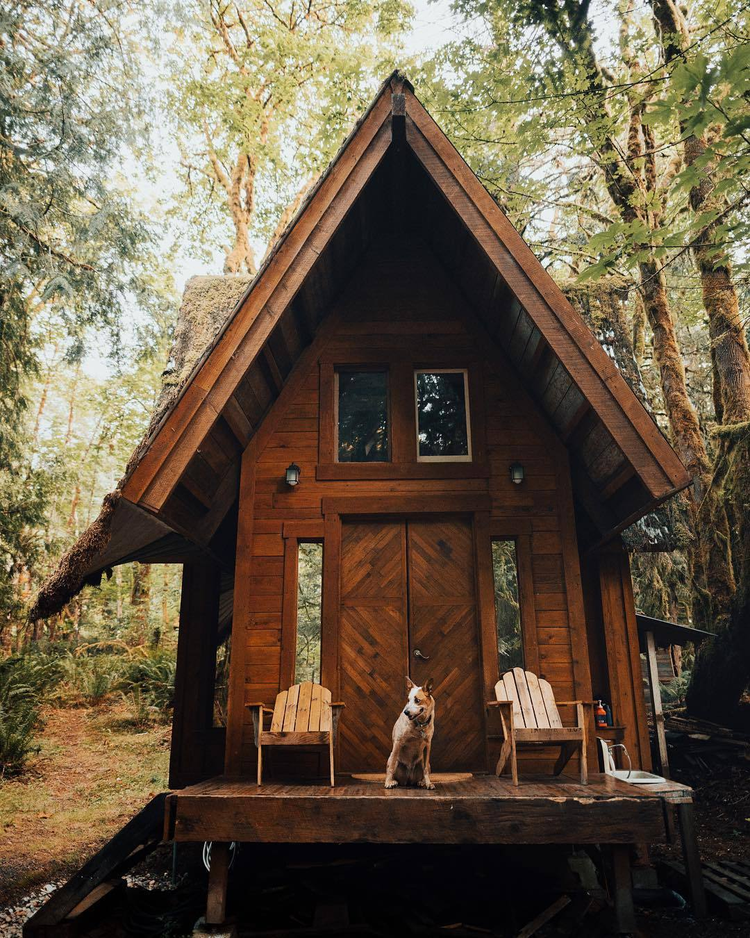 small cabin in woods