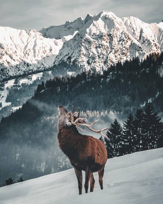 wildlife mountain scene