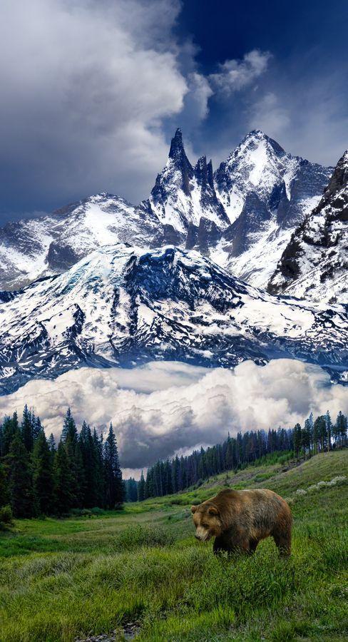 mountain scene with bear