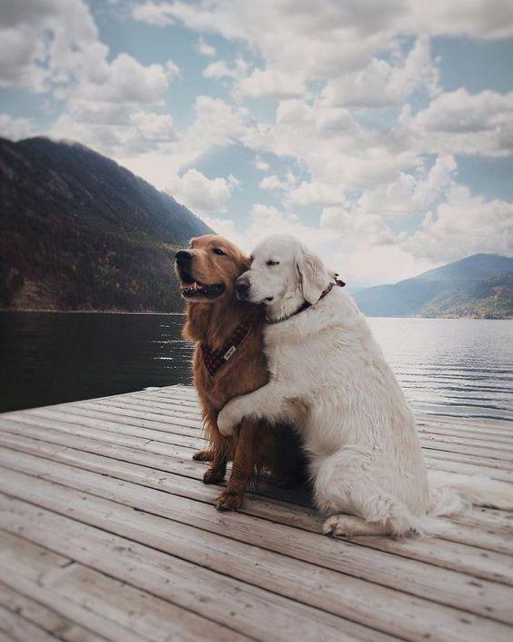 dog hugging her partner on lake dock