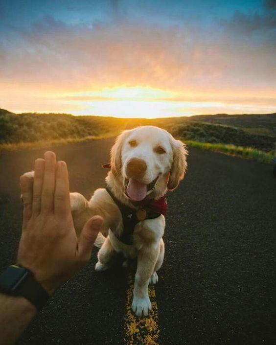doggo high five