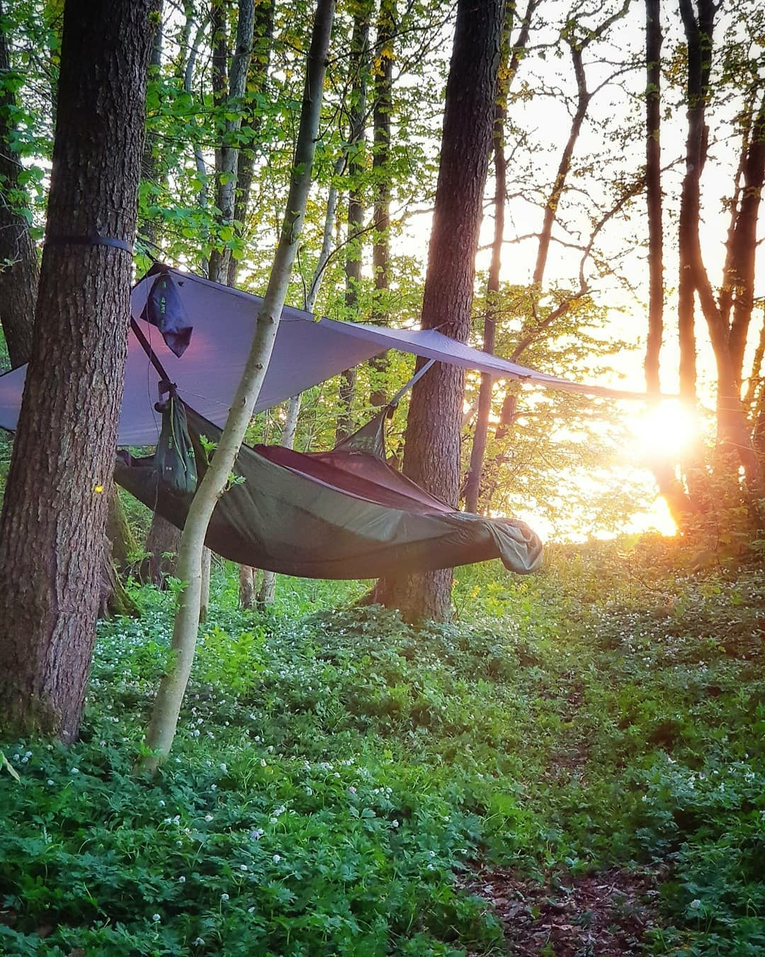 camp hammock
