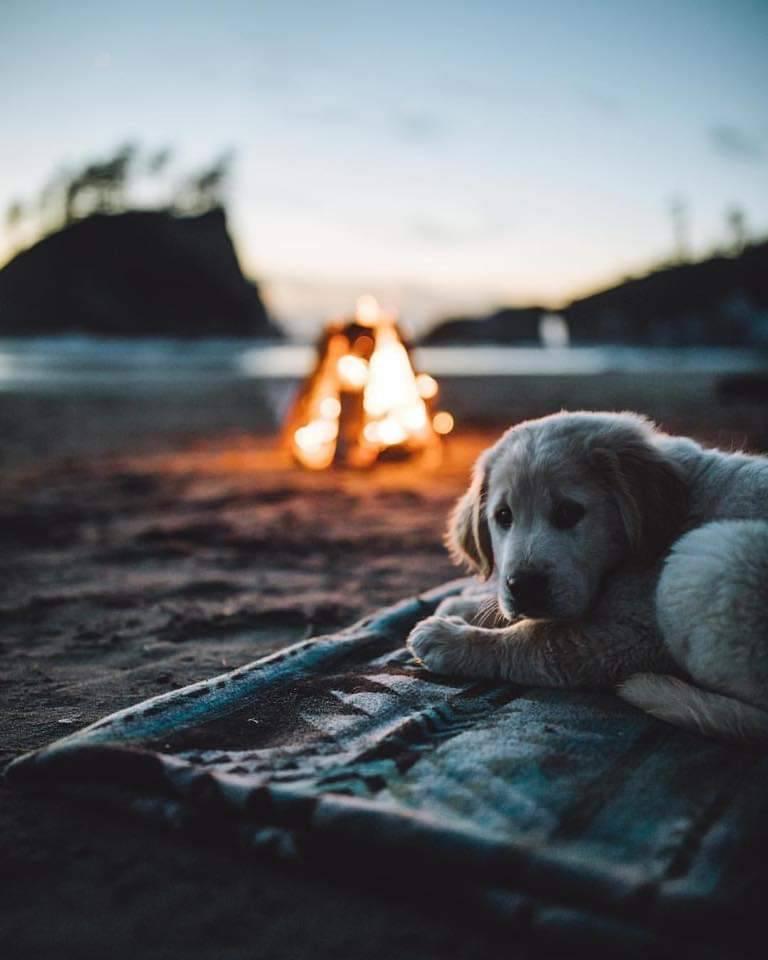 puppy on beach near campfire on Oregon coast