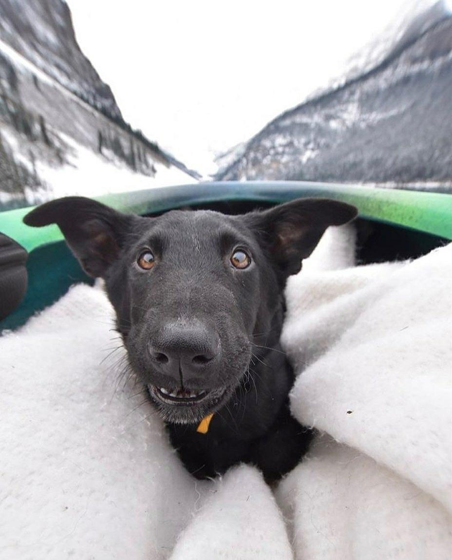 doggo on boat
