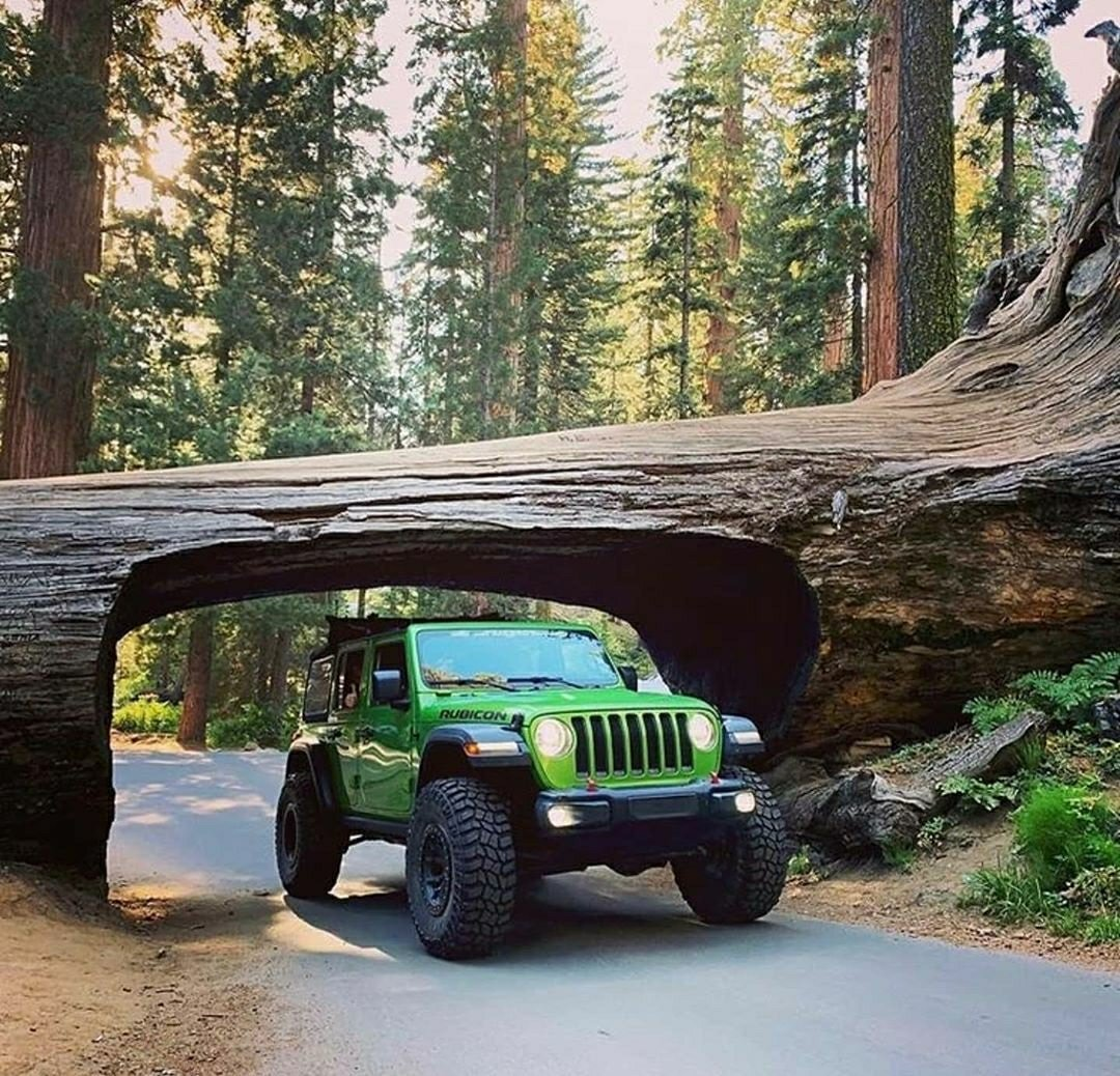 jeep driving through tree tunnel