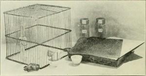 lab rat cage