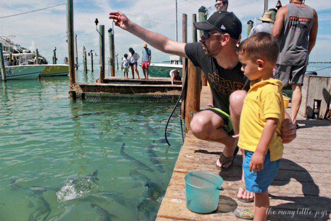 Travel with Kids - The Florida Keys and The Everglades Robbie's