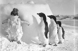 A Rare Look at Antarctica, 1911-1914