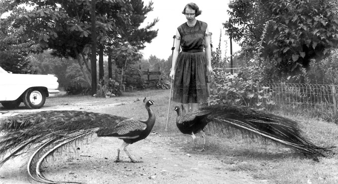 Flannery O'Connor and her peacocks