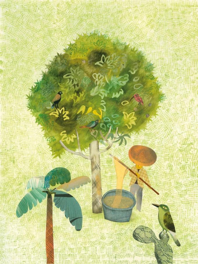 Chewing Gum Tree (sapodilla)