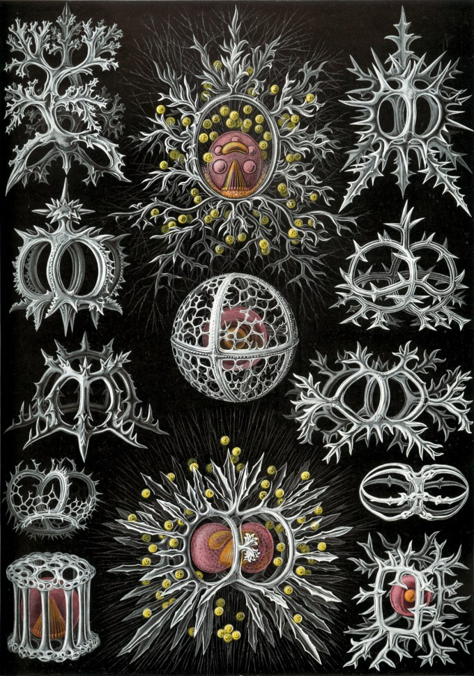 Early-twentieth-century drawing of Radiolaria, one of the first microorganisms, by Ernst Haeckel