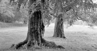 Thoreau on Nature as Prayer
