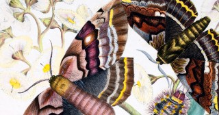 The Science and Splendor of Australian Butterflies: How Two 19th-Century Teenage Sisters' Forgotten Paintings Sparked a Triumph of Modern Conservation