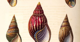 Conchology, or, the Natural History of Shells: Stunning 19th-Century Illustrations from the World's First Color Encyclopedia of Mollusks