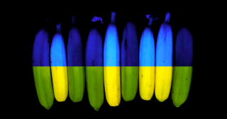 Every Loss Reveals What We Are Made of: Blue Bananas, Why Leaves Change Color, and the Ongoing Mystery of Chlorophyll