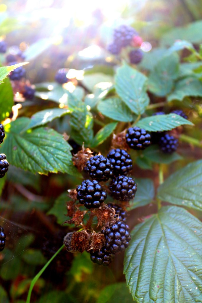 Easy Foraging Recipes