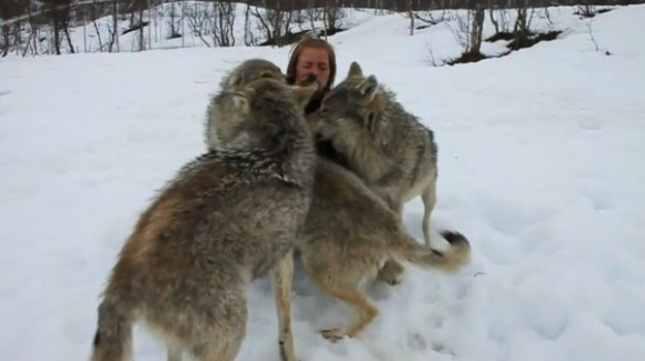 Watch Woman Get Attacked By Wolves With Kisses VIDEO