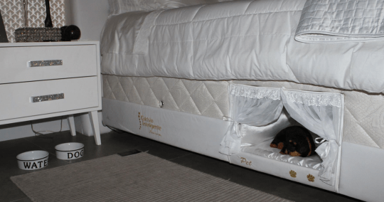 Think of it as a bunk bed for you and your dog