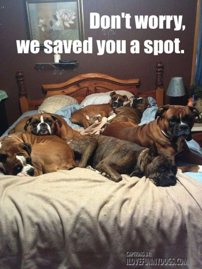 There are ups and downs to sharing your bed with your dog.