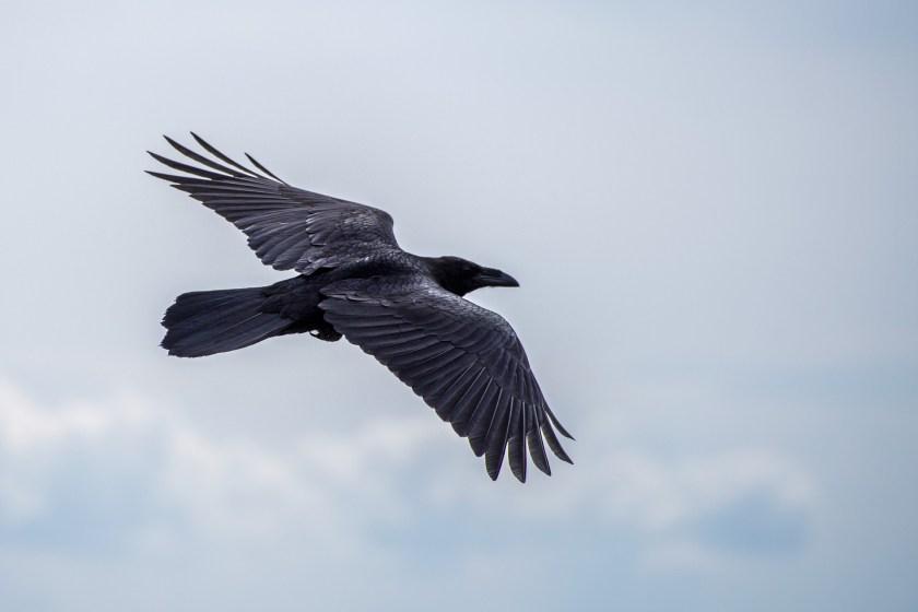 bird-1630795_1920