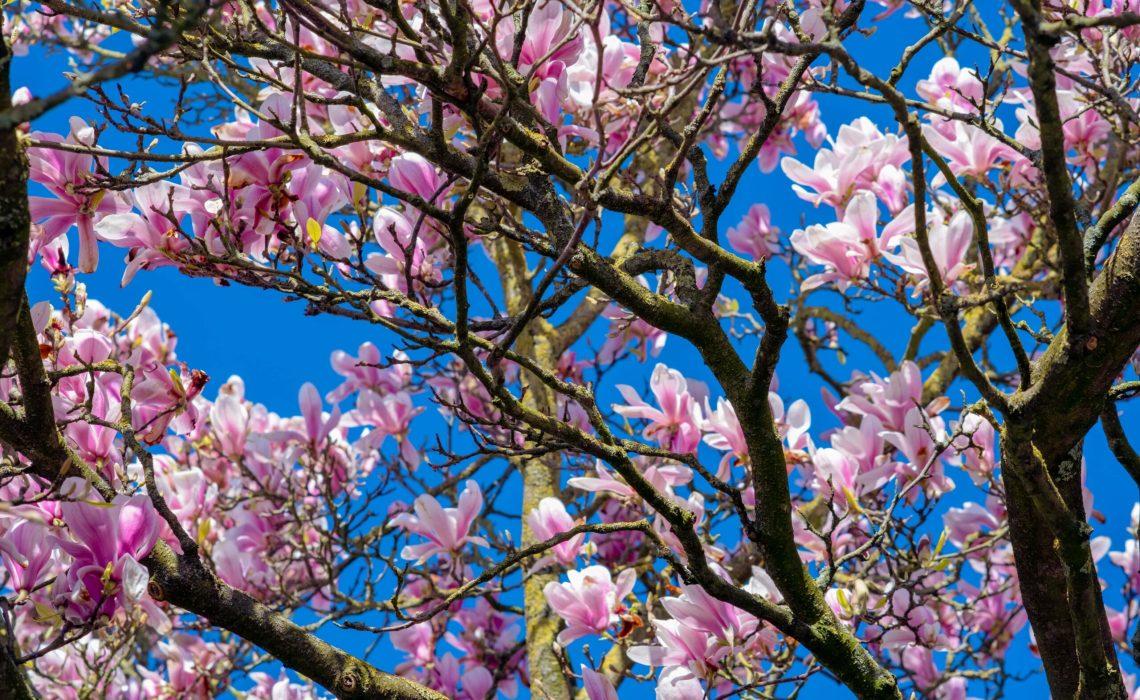 Benvenuta primavera