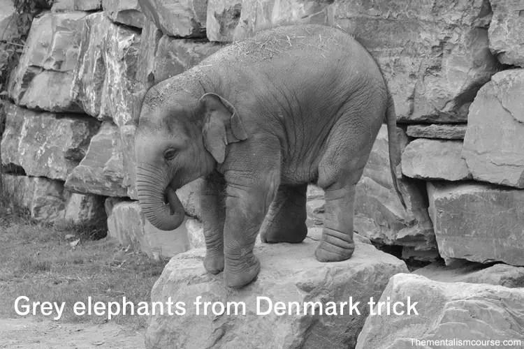 Mind tricks like grey elephant in Denmark