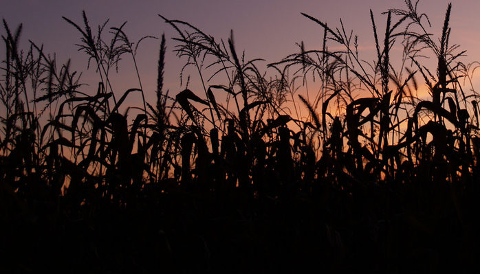 The Cornfield and the Tunnel by Roy Dorman