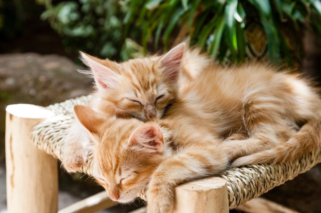 It's easy to fall in love with the cute face of a kitten, but some owners surrender their cats once they grow up. Make sure you're ready to own a cat before you adopt.