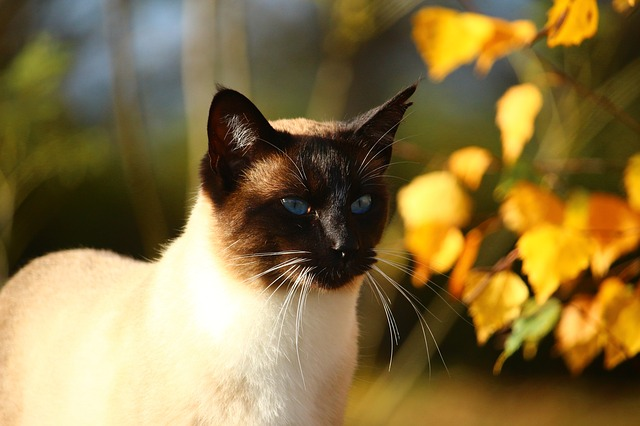 2184c2a13e2f33 Common Fall Hazards For Cats  What You Need To Know