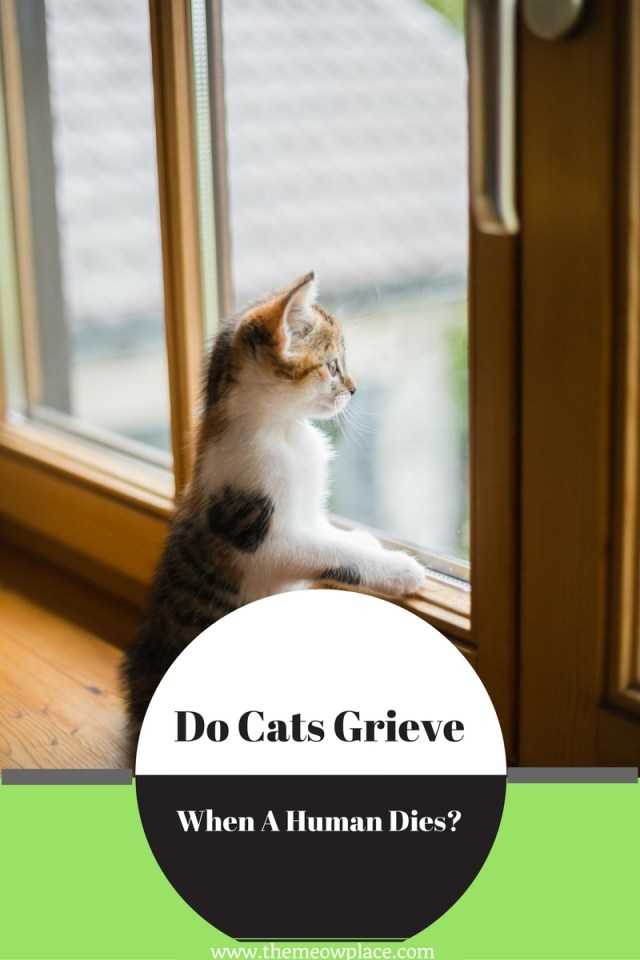 Do Cats Grieve When A Human Dies? Here's What We Found
