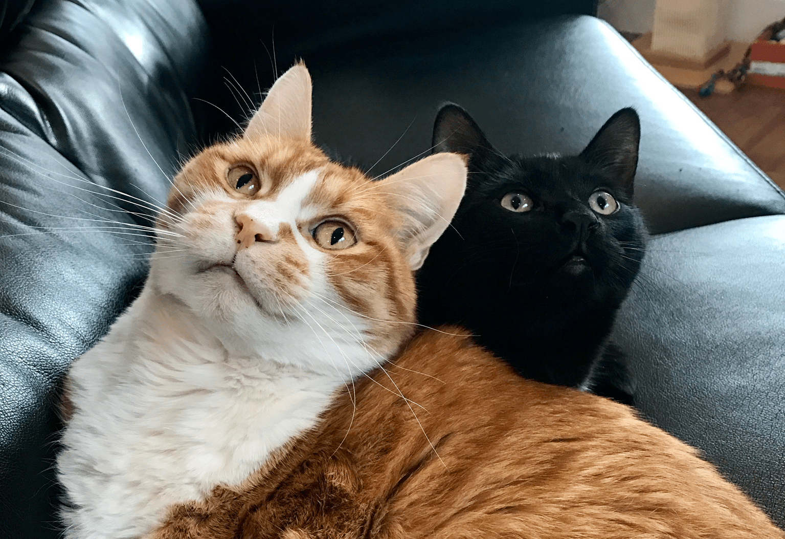 Mister and Smokes beat the odds, and now they're the best of friends, living with their hoomans. Get to know them in this week's Frisky Feline Feature.